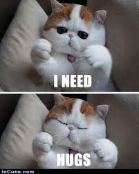 Luhu: Because You Need an Excuse to Look at Cat Memes - Doublie via Relatably.com