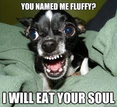Chihuahua Logic memes | quickmeme via Relatably.com