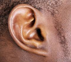 Image result for ear