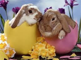 Bientôt Pâques!!!! Faut penser à Pâques!!! Images?q=tbn:ANd9GcSnw0lDmjPRW-UPaJiPqZN48OFM_d3ny26fNdmKf9S4hjgBDjx3Rw