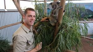 koalas bear record number of joeys bega district news proud oakvale farm and fauna world curator lachlan gordon first time mum lulu
