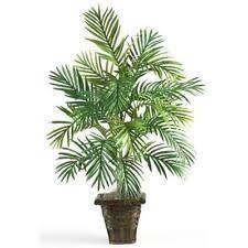 <b>Пальма</b> комнатное растение цветочный декор - огромный выбор ...