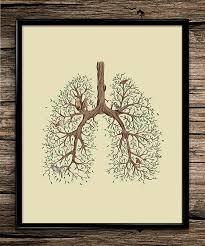 nature lung anatomy science prints anatomy print office decor home decor anatomy office