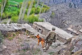 u s department of defense photo essay u s army sgt 1st class anthony heck and his military working dog nina 3 patrol during operation marble lion in s jani khel district