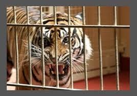 Should animals be kept in zoos  Debate org