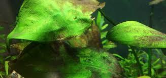 Brown Algae (Diatoms) in <b>Aquarium</b>: How to Identify, Remove ...