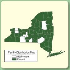 Pontederiaceae - Family Page - NYFA: New York Flora Atlas - NYFA ...
