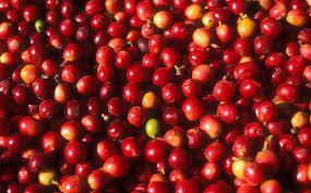sustainably sourced coffee folgers coffee la union farm
