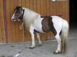 dans Cheval ou poney ?