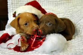 Resultado de imagen para fotos perros navidad