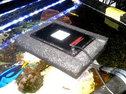 discus fish care