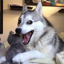 Pun Dog | Know Your Meme via Relatably.com