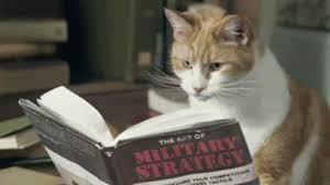 「cat reading」的圖片搜尋結果