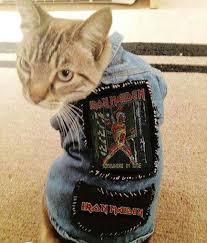 Iron Meowden | <b>Heavy metal cat</b>, Animals, Funny animals