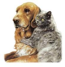 """Résultat de recherche d'images pour """"gif animé chien et chat"""""""