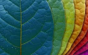 استمتع بالالوان images?q=tbn:ANd9GcS