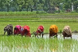Resultado de imagen de mujeres en la agricultura