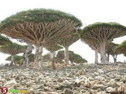 اغرب الاشجار images?q=tbn:ANd9GcS