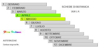 Carduus argyroa [Cardo argenteo] - Flora Italiana