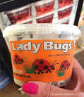 Live Ladybugs for Sale - GardeningZone
