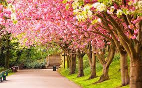 Výsledek obrázku pro spring