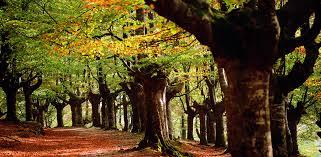 Resultado de imagen de parque natural de urkiola imagenes