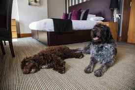 4 reasons to take your canine <b>companion</b> to a <b>dog friendly</b> hotel