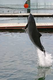 Image result for people catching sharks