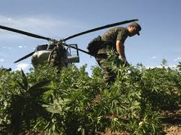Para-military units attack a marijuana plantation like it was a terrorist training camp.