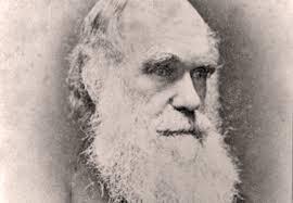 Bildresultat för charles darwin
