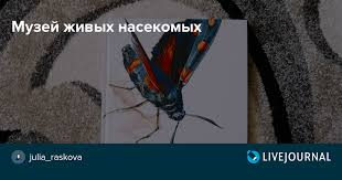 <b>Музей живых насекомых</b>: julia_raskova — LiveJournal