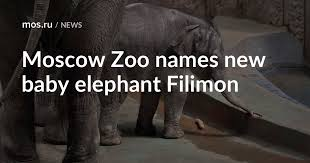 Moscow Zoo names new <b>baby elephant</b> Filimon / News / Moscow ...