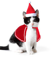 best top cat <b>christmas santa hats</b> ideas and get free shipping ...