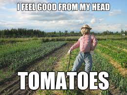 I feel good from my head tomatoes - Scarecrow - quickmeme via Relatably.com
