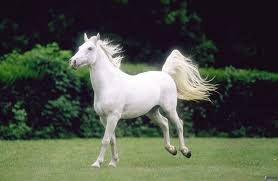 Image result for horse pictures