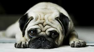 Image result for sad animal