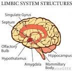 olfactory brain