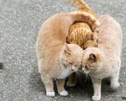 Image result for internet hugs