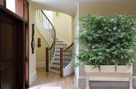 indoor living walls glti