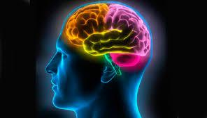 """Résultat de recherche d'images pour """"sucre et cerveau"""""""