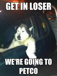 Mean Dog memes | quickmeme via Relatably.com