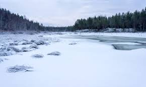 Image result for frozen forest drive