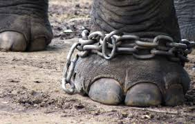 use and misuse of animals essay 5 reasons why animal circuses in the u s need to be banned now