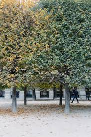 paris photo essays palais royal york avenue palais royal 5134