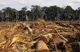 short essay on deforestation in