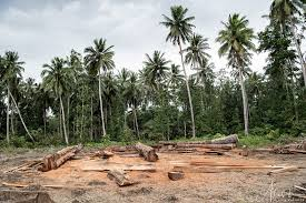 <b>Paradise Lost</b>: Solomon Islands under threat from logging | Global ...