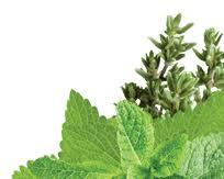 <b>Mint</b> & Herb <b>Hand Wash</b> - <b>Refill</b>
