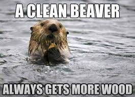 Clean Beaver | ❥ Funny Stuff ❥ | Pinterest