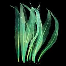 Аквариумные растения красочные кремнезема <b>Аквариум</b> ...