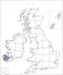 Pinguicula grandiflora   Online Atlas of the British and Irish Flora